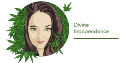 What to Look for When Shopping for Cannabis Flower